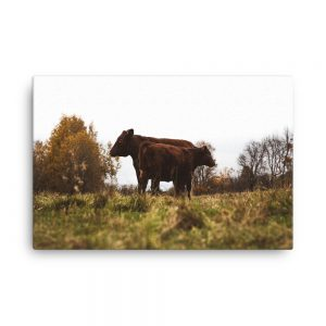 Cattle Camaraderie, Canvas Print, by Garrick Hoffman Photography