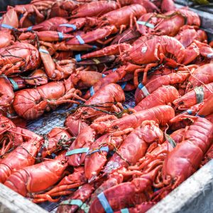 Maine Lobsters, Stock Photo, by Garrick Hoffman Photography